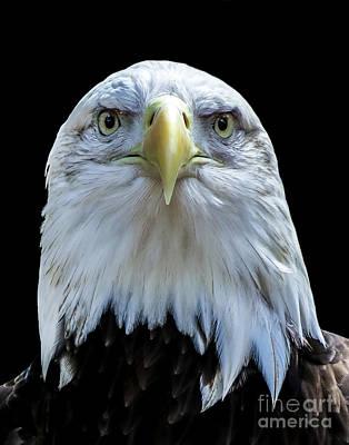 Photograph - Eagle A Four by Ken Frischkorn