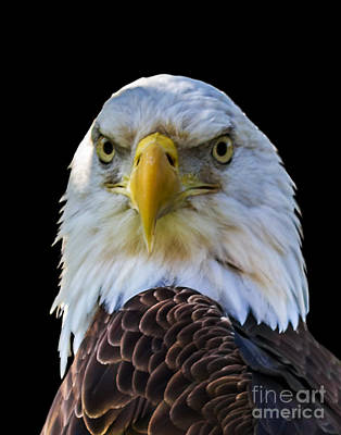 Photograph - Eagle A Three by Ken Frischkorn