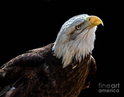 Photograph - Eagle A Two by Ken Frischkorn
