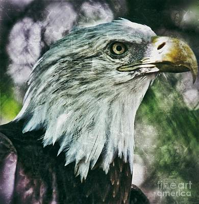 Photograph - Eagle by AK Photography