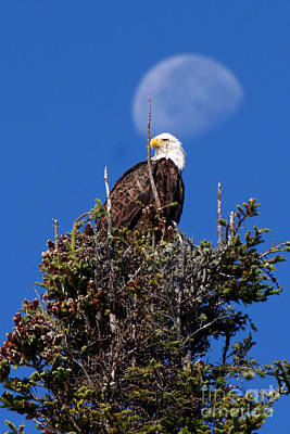 Photograph - Eagle And The Harvest Moon by Butch Lombardi