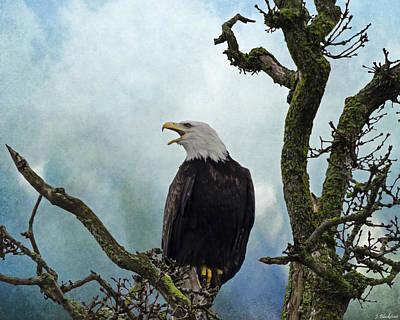Photograph - Eagle Art - Character by Jordan Blackstone
