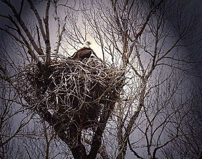 Eagle At Home Art Print