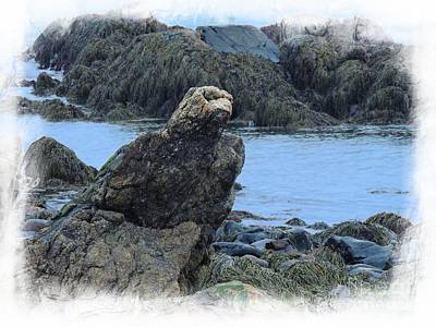 Photograph - Eagle At Rest by Marcia Lee Jones