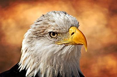 Eagle At Sunset Print by Marty Koch