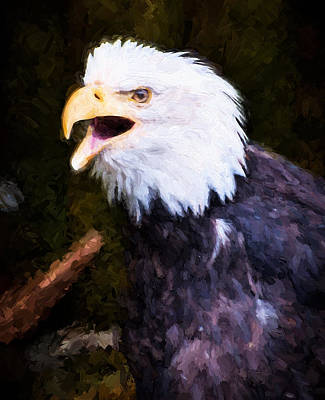 Photograph - Eagle by Bill Howard