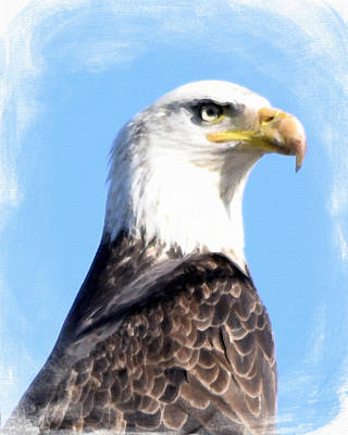 Painting - Eagle  by Bonnie Bruno