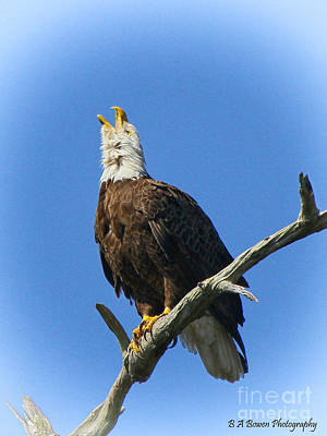 Photograph - Eagle Calling by Barbara Bowen