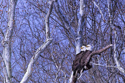 Christmas Holiday Scenery Photograph - Eagle Couple Above Potomac River by Francis Sullivan