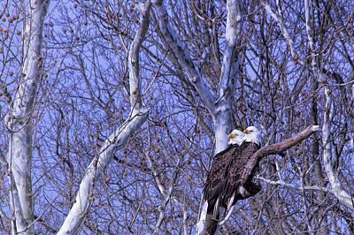 Eagle Couple Above Potomac River Art Print by Francis Sullivan
