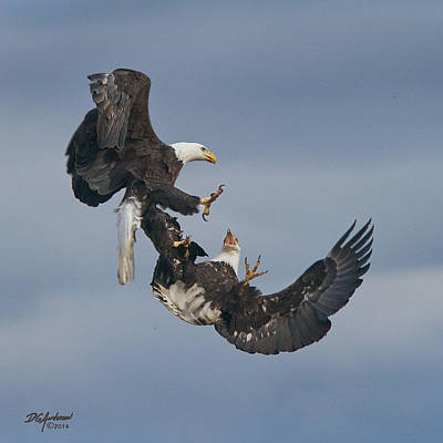 Photograph - Eagle Dispute by Don Anderson