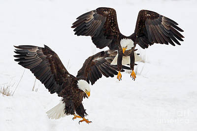 Photograph - Eagle Duo by Bill Singleton