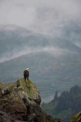 Eagle Photograph - Eagle by Enrique R. Aguirre Aves