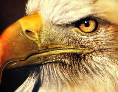 Photograph - Eagle Eye 7 by Marty Koch