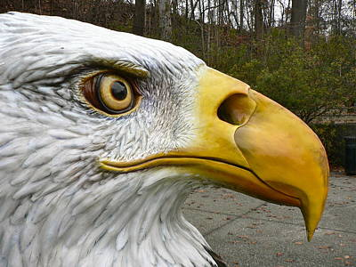 Photograph - Eagle Eye by Jean Wright