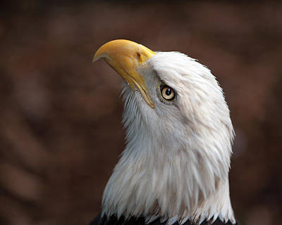 Photograph - Eagle Eye by Tammy Smith