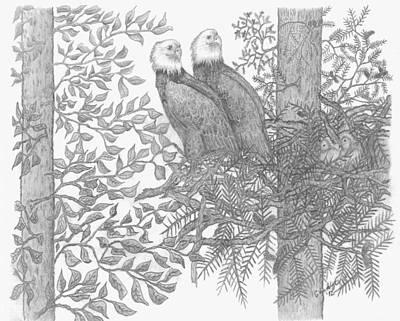 Pine Cones Drawing - Eagle Family by Carolann Van de Ligt
