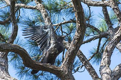 Photograph - Eagle Flight Prep by Michael Gooch