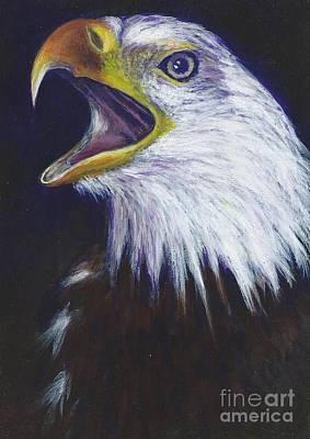 Bald Eagle - Francis -audubon Art Print