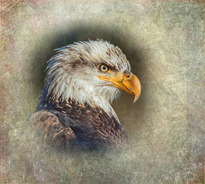Photograph - Eagle Icon by Angie Vogel