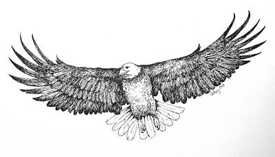 Drawing - Eagle In Flight by Catherine Howley