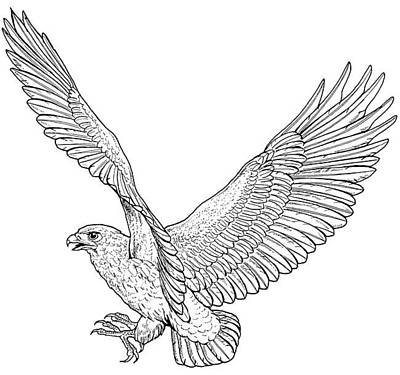 Eagle In Flight Drawing - Eagle In Flight by For The Love Of Art