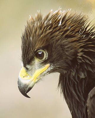 Photograph - Eagle In Profile by Jim Snyder