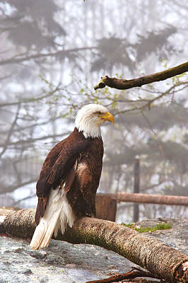 Photograph - Eagle In The Fog by Mary Almond