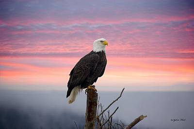 Photograph - Eagle In The Mist by Sylvia Hart