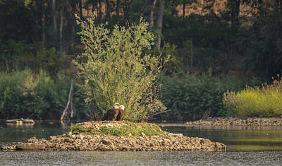 Bald Eagle Photograph - Eagle Island by Loree Johnson