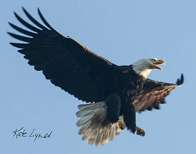 Photograph - Eagle Landing by Kate Lynch