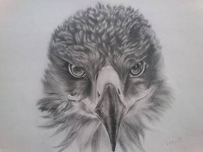 Drawing - Eagle by Lucy D