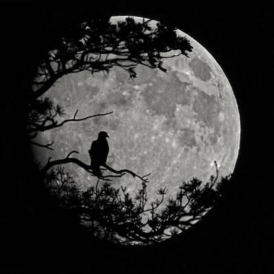 Photograph - Eagle Moon by Ernie Echols