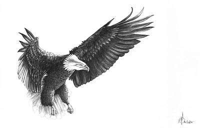 Bald Eagle Pencil Drawing Drawing - Eagle by Murphy Elliott