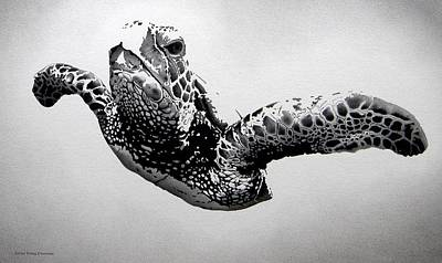 Green Sea Turtle Drawing - Eagle Of The Deep by Doug Comeau