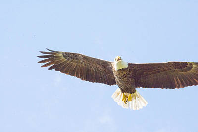 Photograph - Eagle On Patrol by Michael Gooch