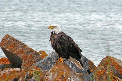 Unicorn Dust - Eagle on rocks by John Welling