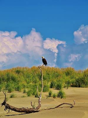 Eagle On Watch Art Print