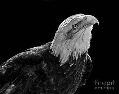 Photograph - Eagle One by Ken Frischkorn