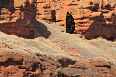 Photograph - Eagle Over Echo Canyon by TL  Mair