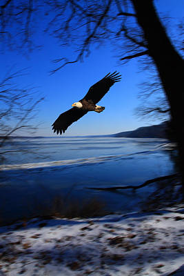 Photograph - Eagle Over The Illinois River by Coby Cooper
