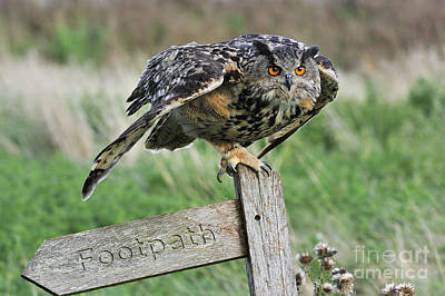 Photograph - Eagle Owl 6 by Arterra Picture Library
