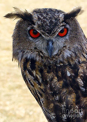 Photograph - Eagle Owl by Anthony Sacco