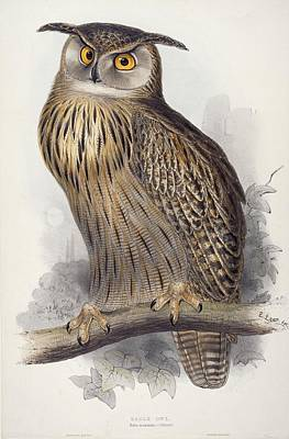 Colored Owl Painting - Eagle Owl.  Bubo Maximus by Edward Lear