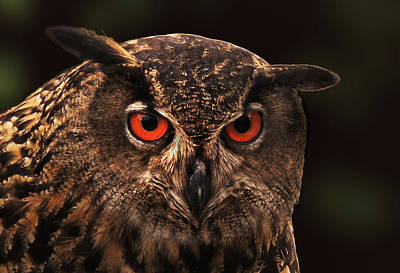 Photograph - Eagle Owl Intensity by Deborah Smith
