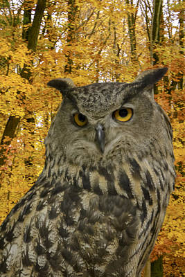 Photograph - Eagle Owl by Jack R Perry