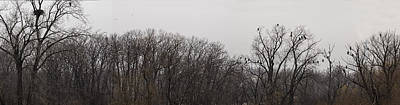 Eagle Photograph - Eagle Panorama by Thomas Young