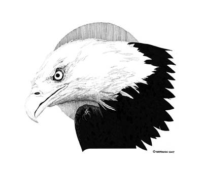 Wall Art - Drawing - Eagle by Paul Shafranski