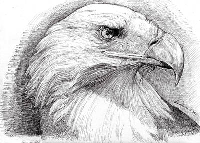 Painting - Eagle Portrait by Alban Dizdari