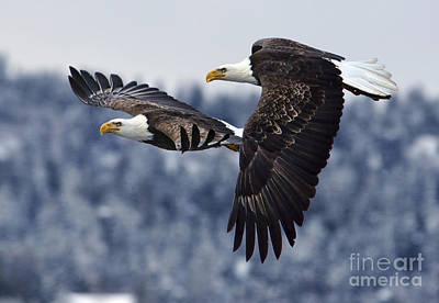 Photograph - Eagle Race by Deby Dixon